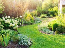Gazon et pelouse au cœur de tous les jardins